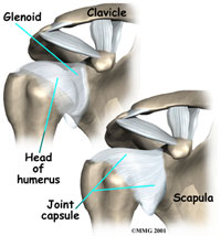 shoulder-anatomy-ligaments