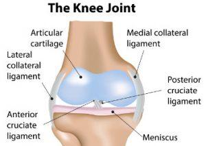 Knee Injuries & Conditions   Chicago Orthopaedics & Sports Medicine