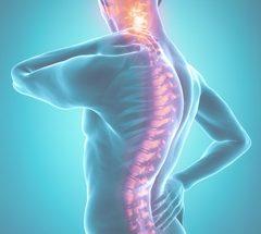 ProOrtho Spine Specialties