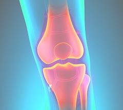 ProOrtho Orthobiologics Specialties